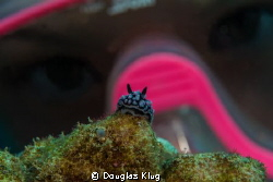 close-up encounter. A junior  diver inspects a pustule nu... by Douglas Klug